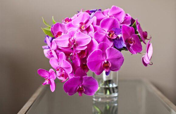 İstanbul Göztepe Orkide Çiçek Hizmeti